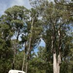 aus-small van or big trees